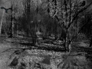 mycreativity my_edit my_photography pautzispics pautzisedits freetoedit