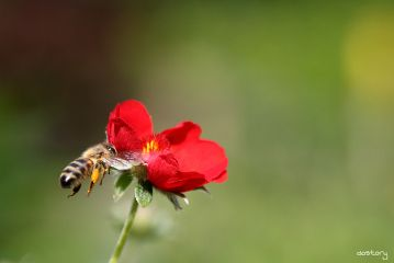 photography myphoto bee flower closeup