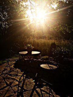sunlight nature shadow
