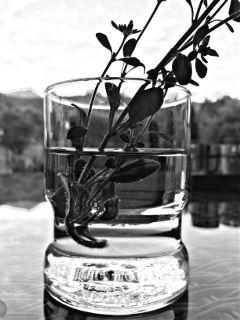 glasswater plant blackandwhite