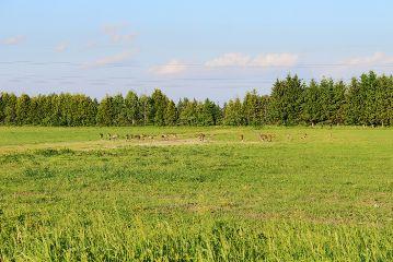 freetoedit cranes birds big field