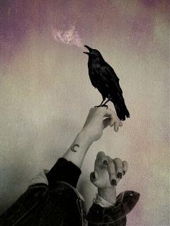 freetoedit pautzisedits handsremix crow