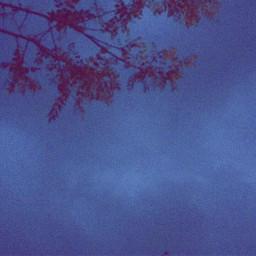 filter trees purple sky