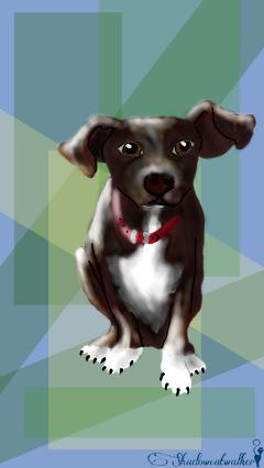 dog chiweenie cute petsandanimals lovedogsforever