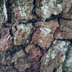 texture bark tree wood woodland freetoedit