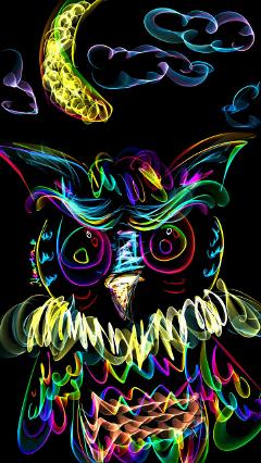 owl bird animals petsandanimals nature