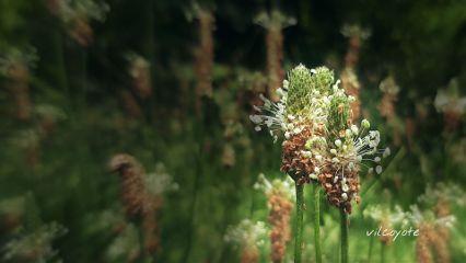 flower nature softfocus