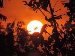 sun sunset orangesky photography photooftheday