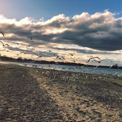 freetoedit seagulls nature beach