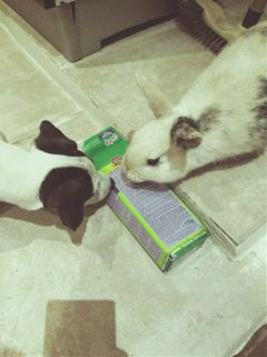 rabbit puppydog cute meeting animals freetoedit