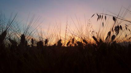 freetoedit photography sunset nature