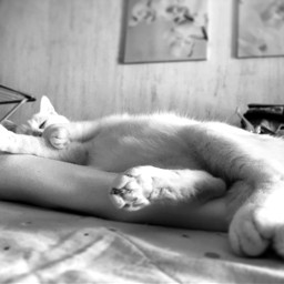 miaoo cat sonno