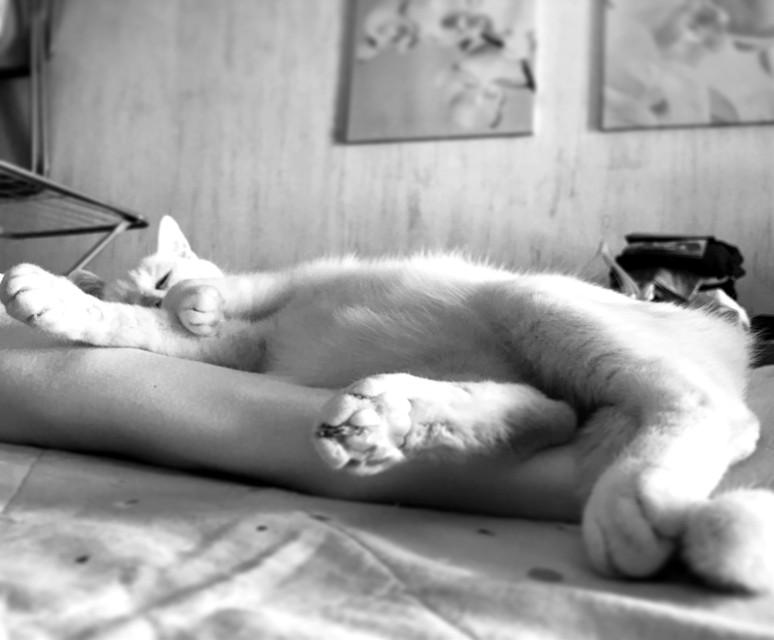 #miaoo#cat#sonno