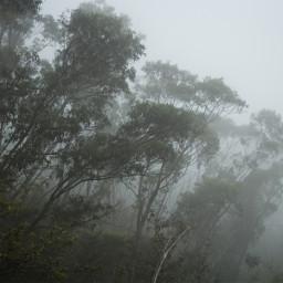 freetoedit bluemountains australia foggy