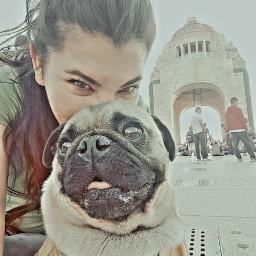steff puglove babydog perhijo pug freetoedit