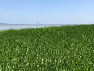 beach sea grass nature freetoedit