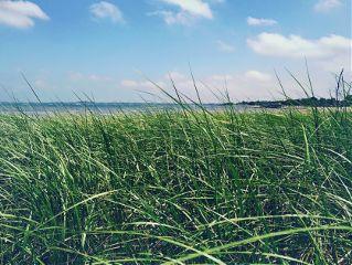 freetoedit beach grass