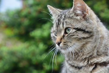cat animal photography petsandanimals