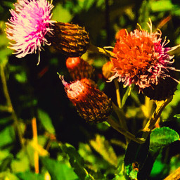 upcloseandpersonal petalsandblooms portraitsofcolor pedalperfection fragile
