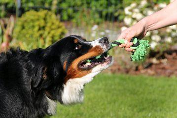 dogs fun nature petsandanimals photography