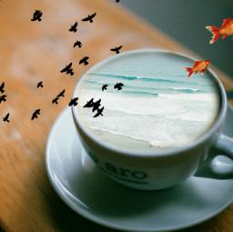 freetoedit beach sea cup birds