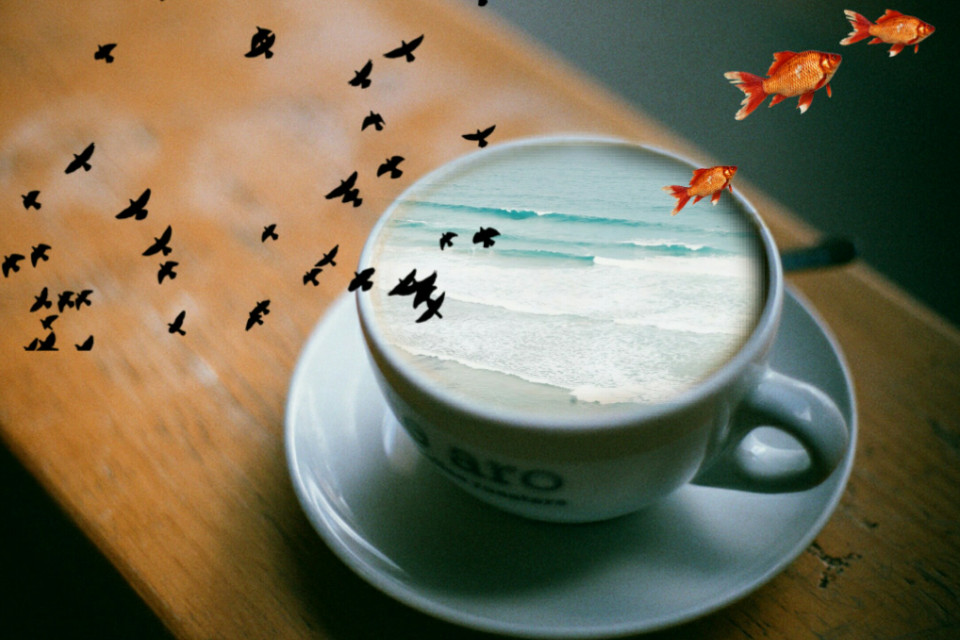 #beach #sea #cup #birds #fishes