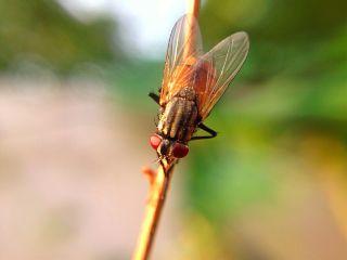 iphonephotography fly colorful macro closeup freetoedit