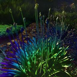 peace gardenflower italy