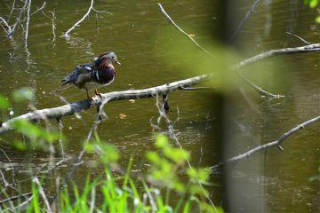 nature photography emotion bird