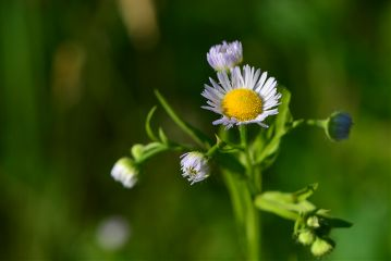 nature photography flowers macro