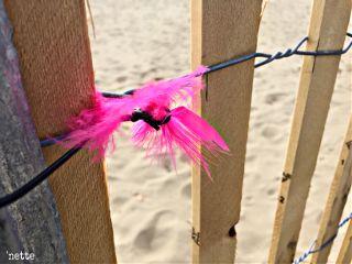 dpcpink feather fence onthebeach myoriginalphoto