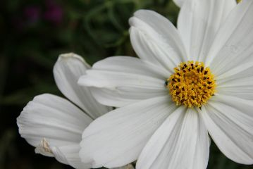 freetoedit nature photography naturephotography flower