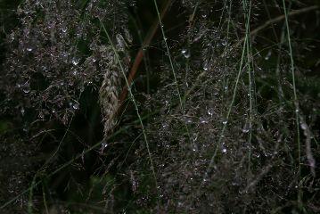 freetoedit nature rain rainyday dark