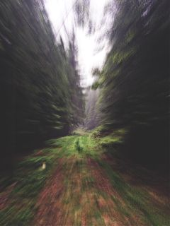 forest way effect