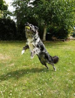 dog england phoneography myart summer