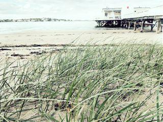 beach grass overexposed freetoedit