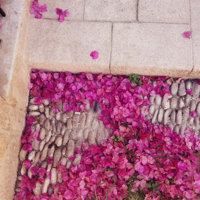 #freetoedit #flowers #summer #photography #interesting #art #nature #beautiful #wow