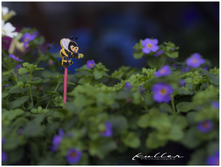 flowers flowershop deco bee