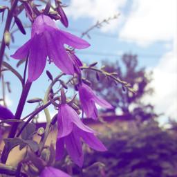 summer flowers purple garden lowangle