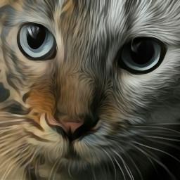 myedit summer cat tiger hybridanimals freetoedit