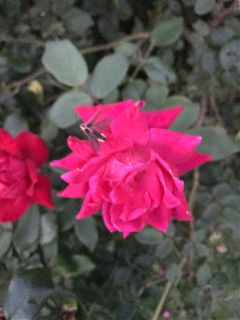nature flower flowers lightningbug firefly