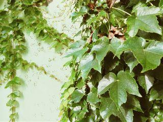 summer green sunshine 正是江南好风景