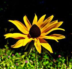 nature flower photography wildflower naturephotograpy