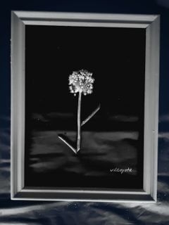 cipollaflower cute blackandwhite onionflower artwork