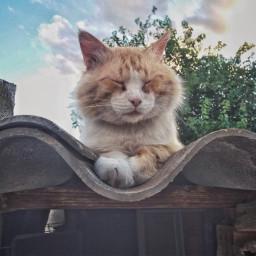 freetoedit cat catlove pets animallover