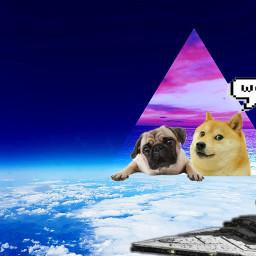 doge wow starwars cute freetoedit