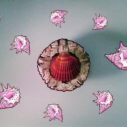 freetoedit seashell