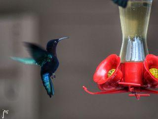 nature photography bird nikon