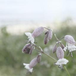 flowers nature