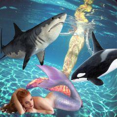 freetoedit shark